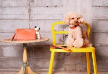 Irlanda Zapatero Luxury Accessories For Dogs