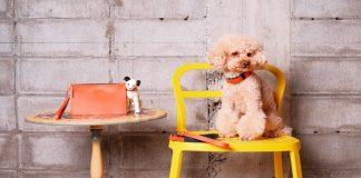 Irlanda Zapatero Luxury Accessories For Dogs