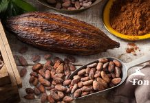 Cacao Pods, Beans, Powder