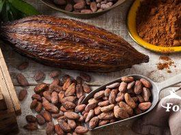 Cacao Pods, Beans, Powder