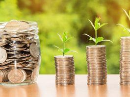 Money, Growth, Seedlings