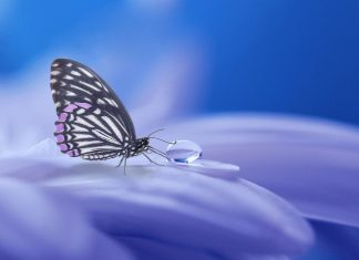 Butterfly and water droplet